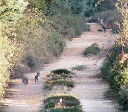 Photo: Momento especial. Curioso. Único. Observaba varios conejos cuando apareció este precioso ciervo...coincidencias.