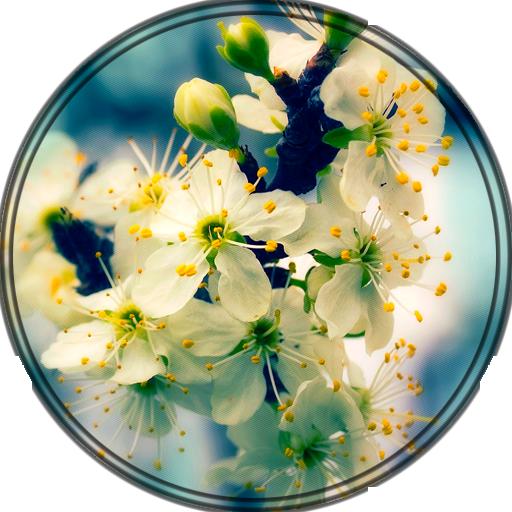 Xperia™ Theme Beautiful Spring