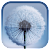 Dandelion Live Wallpaper file APK for Gaming PC/PS3/PS4 Smart TV