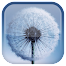 Dandelion L.. file APK for Gaming PC/PS3/PS4 Smart TV