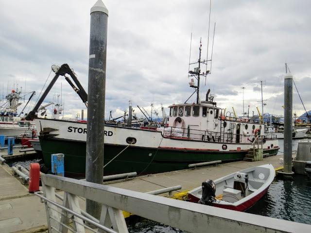 Stormbird in Homer Harbor