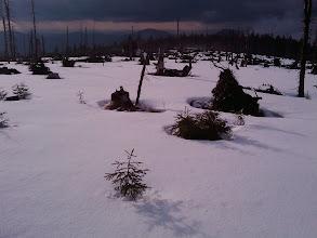 Photo: Zwercheck-Hochebene bei der Schwarzensee-Wand - nur noch Baumstümpfe stehen nach dem Kyrill