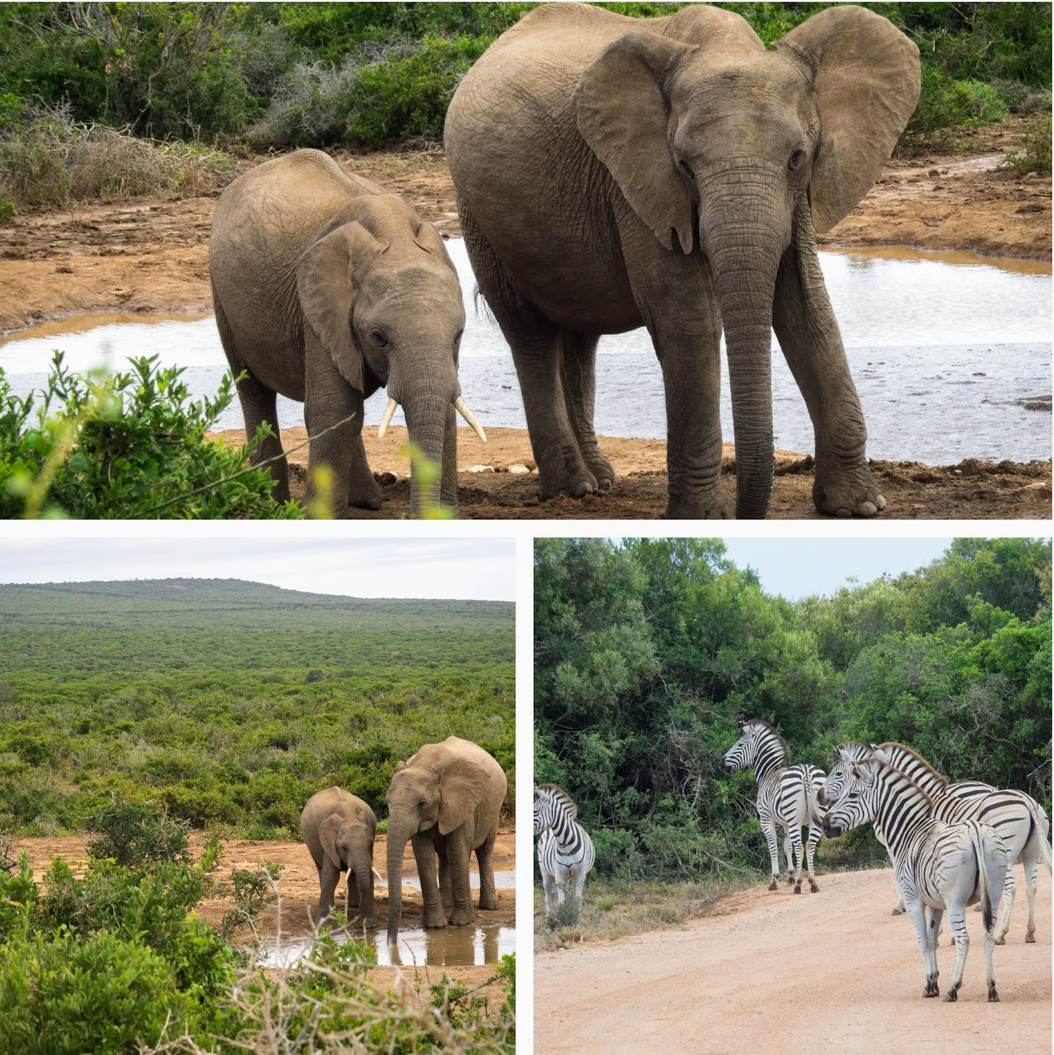Some of the animals spotted during self-drive safari at Addo National Park.