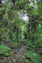 Photo: chemin de la Soufrière