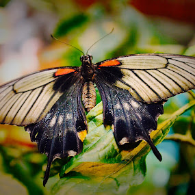 Butterfly Palace by Amelia Rice - Animals Insects & Spiders ( butterfly, butterflies )