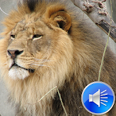 Lion Sounds - Android Apps on Google Play - photo#43