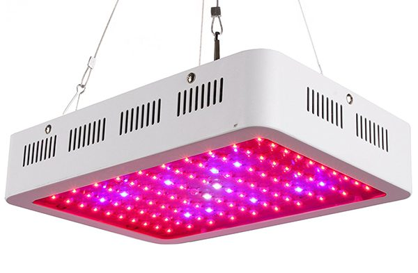 10 Best LED Grow Lights for Cannabis Home Growers