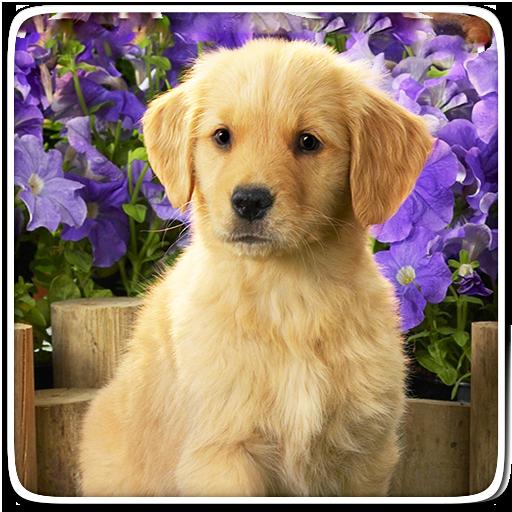 Puppy Live Wallpaper Icon