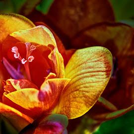 by Marek Rosiński - Flowers Flower Arangements ( close up, beauty,  )