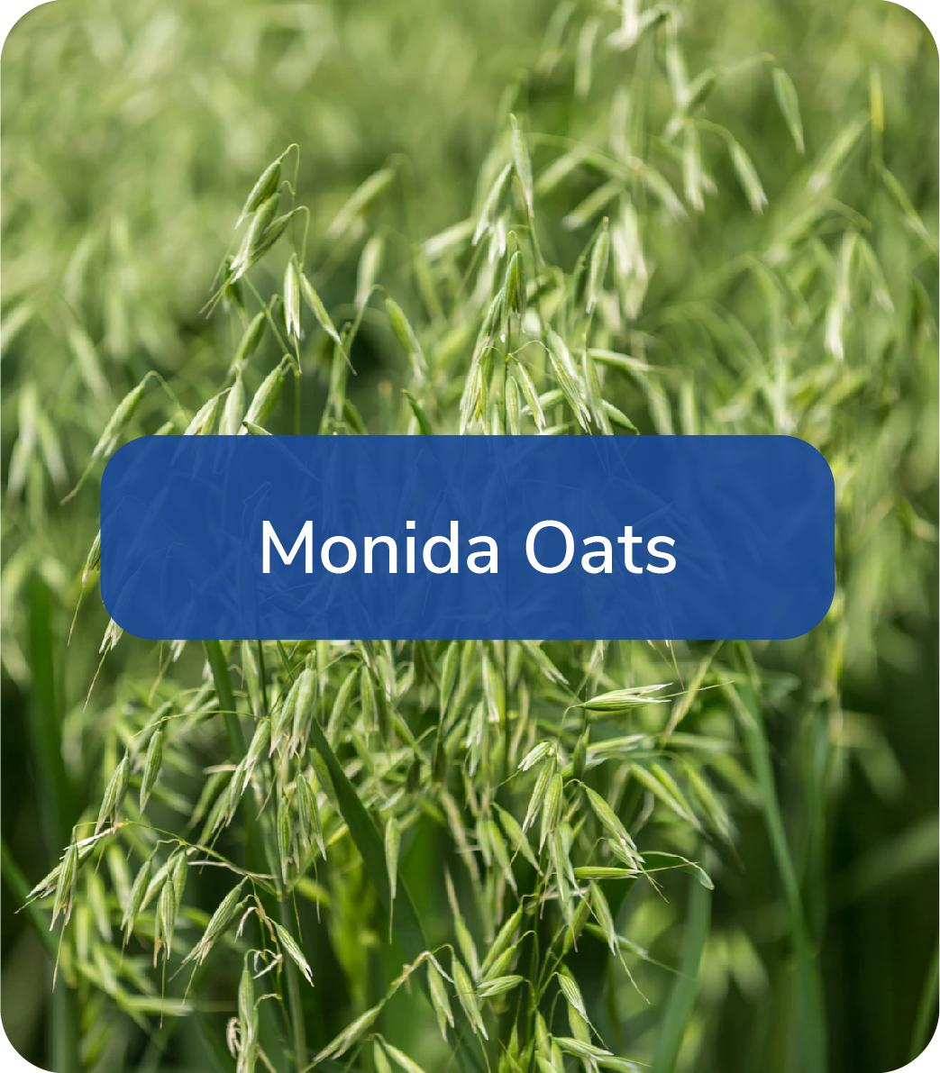 monida oats