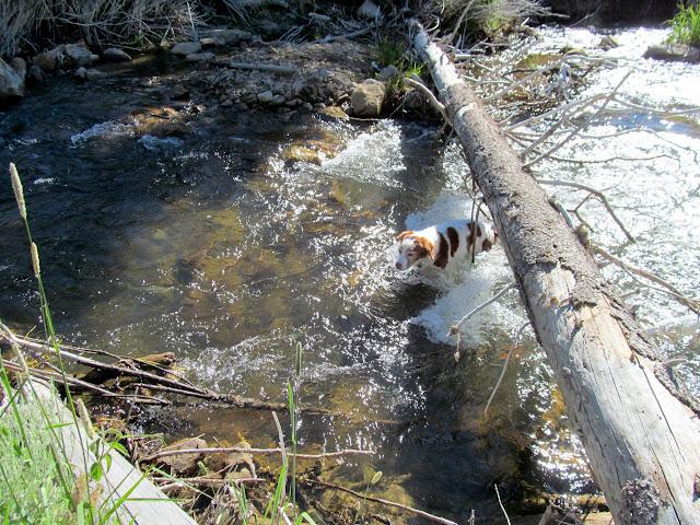 Torrey struggling to cross the creek