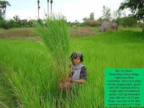 Photo: Ms. Im Sarim, Peak Bang Oang Village, Takeo Province, Cambodia, holding an SRI rice plant.
