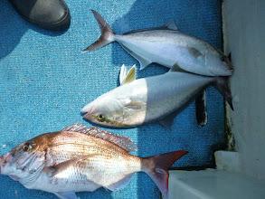 Photo: 真鯛とネリゴ!トリプルキャッチ! ・・・シケてきたので早目の納竿です!