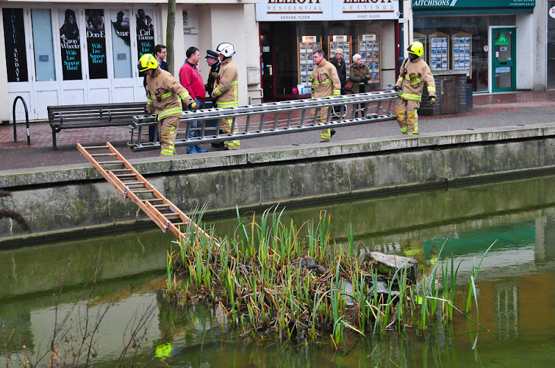 Photo: PIC SUPPLIED BY GEOFF ROBINSON PHOTOGRAPHY 07976 880732.PIC SHOWS THE FIREMEN TRYING TO RESCUE A SQUIRREL(SITTING ON THE ISLAND IN MIDDLE OF THE POND)  IN WATFORD,HERTS,ON JAN 6TH. An incredible THREE fire engines were called to rescue a tiny grey squirrel after it became stranded on reeds in the middle of a town pond.At least SEVEN firefighters with TWO ladders helped to rescue the rodent from the pond, after a local resident called to say it had fallen in.The squirrel could not climb back up the steep concrete walls and had taken refuge on a small island of rocks in the high street pond in Watford, Herts yesterday (Sun) at around 12.15pm. SEE COPY CATCHLINE  THREE fire engines rescue SQUIRREL