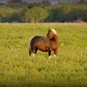 by Jan Davis - Animals Horses