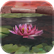 Lotus 3D Live Wallpaper image