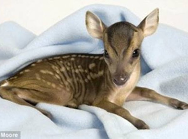 Staff members are optimistic that Rupert, now 5 days old, will make a full...