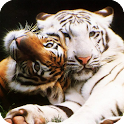 Big Cats Pack 2 Live Wallpaper icon