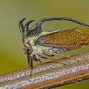 Treehopper