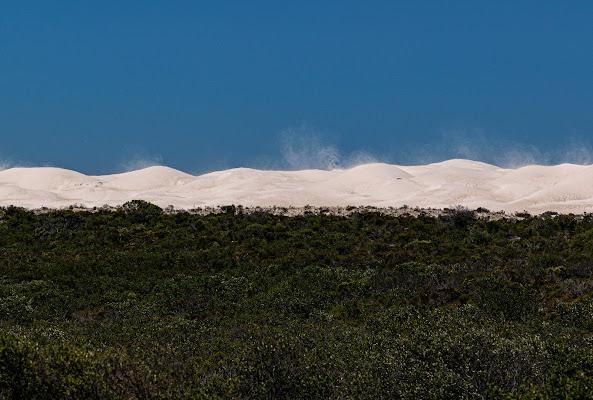 Vegetazione, deserto e vento di Morellato Marco