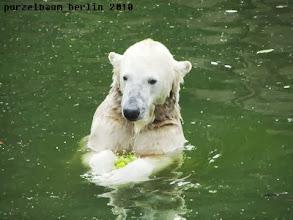 Photo: Die haelt Knut fest in den Tatzen ;-)