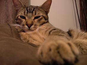 Photo: Sleepy head.