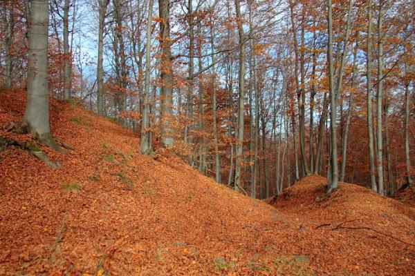 tappeto di foglie di ev84