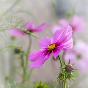 winning wildflower.jpg