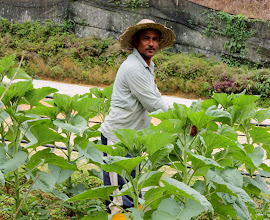 Photo: Year 2 Day 115 - Worker at the Honey Farm Nursery