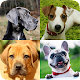 Dogs Quiz - Guess All Dog Breeds in the Photos APK
