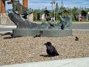 Photo: Crow and statue for size