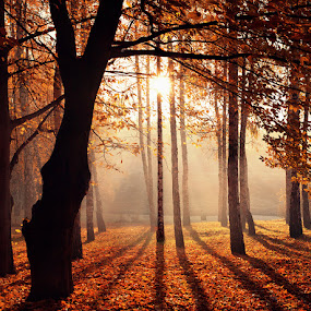 by Alexandru Popovski - Landscapes Travel ( fall, color, colorful, nature )