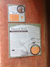 Photo: info about the maned wolf