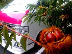 ハイエース TRH200Vのカスタム事例画像 シュナ 🐾🐶🐾CT2期生さんの2020年11月26日03:53の投稿