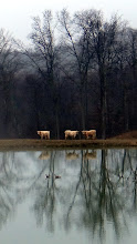 Photo: Geese 'n Coos reflected...
