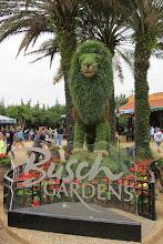 Photo: Busch Garden in Tampa, FL. Tampan suuri huvi- ja eläinpuisto