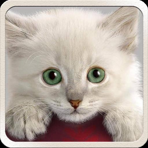 App Insights Cat Hd Wallpapers Cute 2018 Cool Cat Wallpaper Apptopia