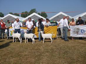 Photo: Rubriek 1 + 6: witte lammeren geboren tussen 14-2 en 9-4 2013. 1a. Marijke 205; 1b. Marijke 207; .... 1d. Hilda 13; ...