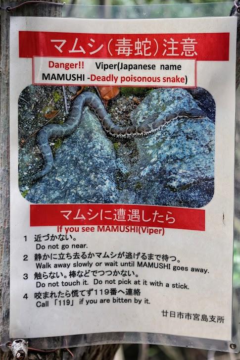 Miyajima, Itsukushima, wąż, Mamushi, Viper, snake