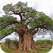 App Icon for eTrees of Southern Africa App in Czech Republic Google Play Store