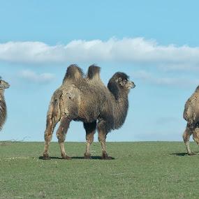 by Sue Tydd - Animals Other Mammals
