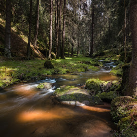 Kamenice by Radek Winter - Landscapes Forests ( water, forest )