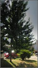 Photo: Vișin (Prunus cerasus) - din Turda, Piata 1 Decembrie 1918, langa BIG - 2018.05.24