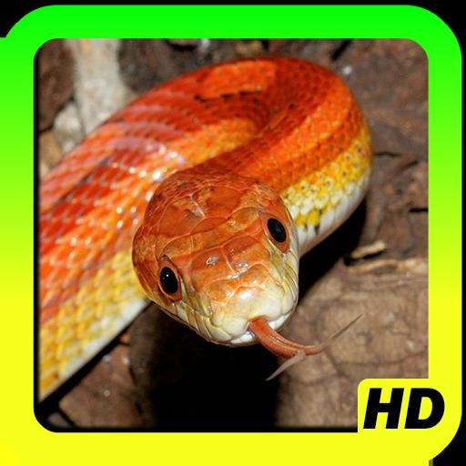 個人化App ヘビの壁紙 LOGO-3C達人阿輝的APP