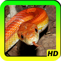 Snakes Wallpapers icon