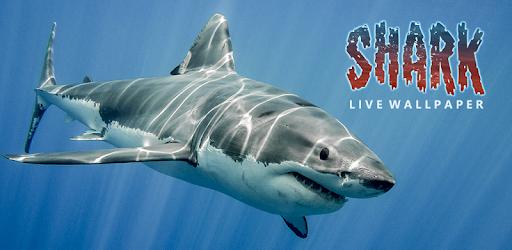 Requin Hd Fond D écran Animé Pour Pc Windows Téléchargement