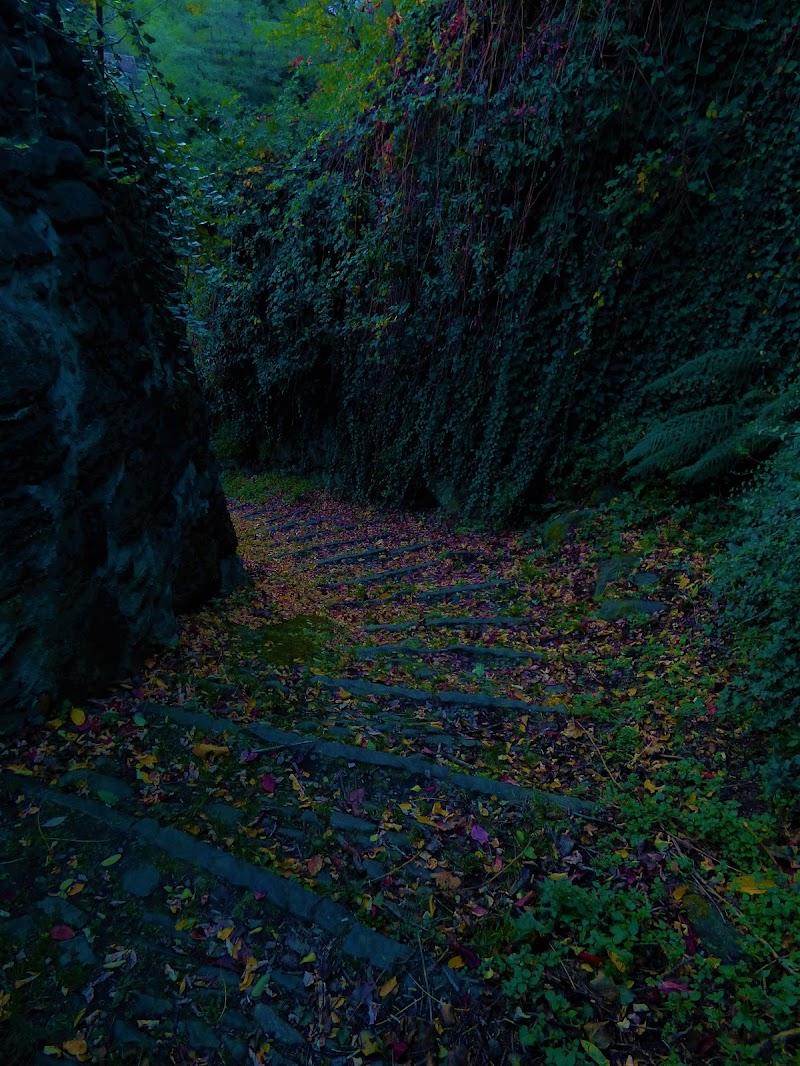 La bellezza dell'autunno... di Ruggero