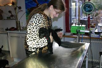 Photo: Mimi lässt sich streicheln.
