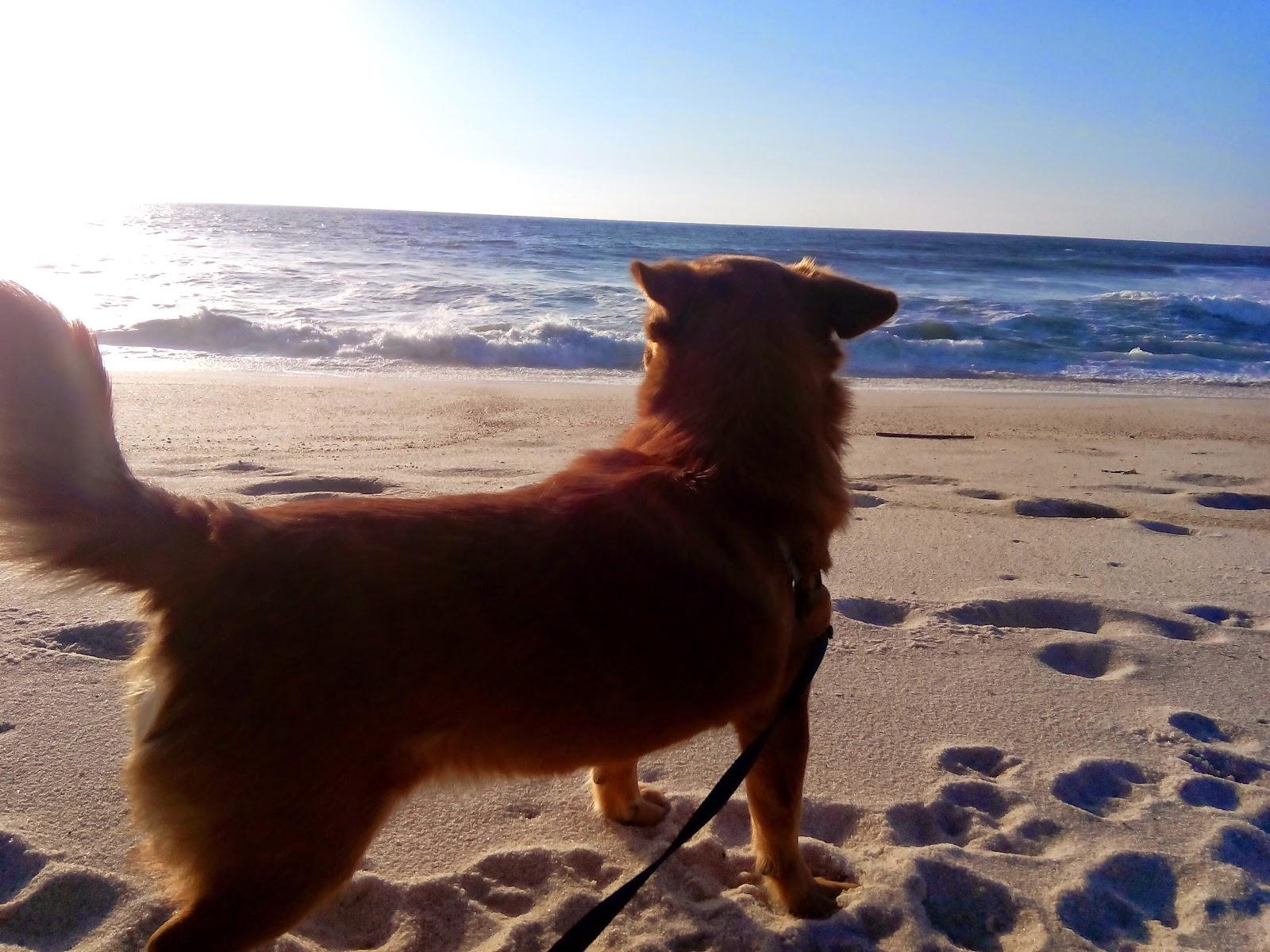 Fox na praia.jpg