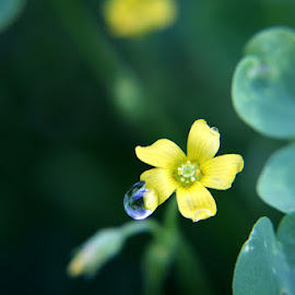 by Crystal  Wilson - Nature Up Close Natural Waterdrops